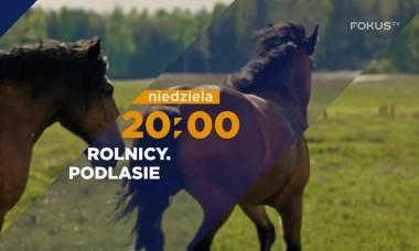 FOKUS TV serial ROLNICY. Podlasie 🔝 Emilka powiększa hodowlę, Tomek inwestuje w technikę💪 odc.13